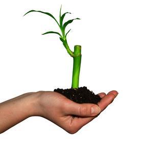 Ein Management der Nachhaltigkeit im Mittelstand: Verantwortung für die Umwelt