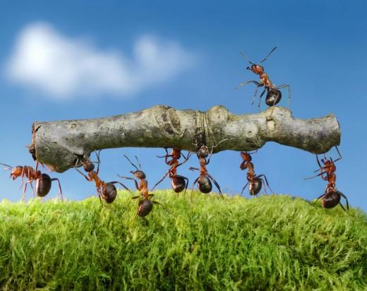 Verantwortung verteilen bei Unternehmenswachstum