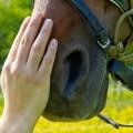 Training mit Pferden als Weg zur erfolgreichen Führung im Unternehmen