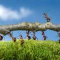 Fraktale Visionen – Verständnis für die Strategie des Unternehmens