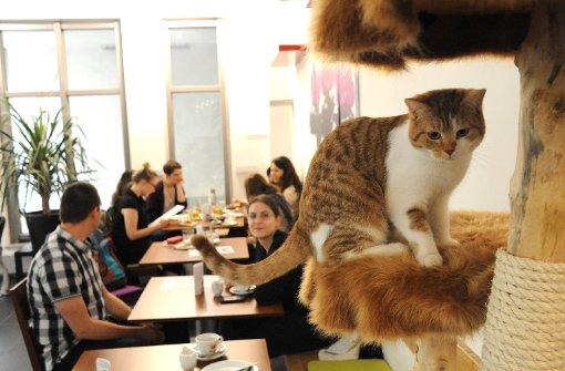 """Interview mit Café Katzentempel: """"Hier leben 6 Katzen!"""""""