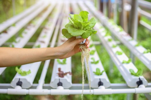 urban farming im büro kantine