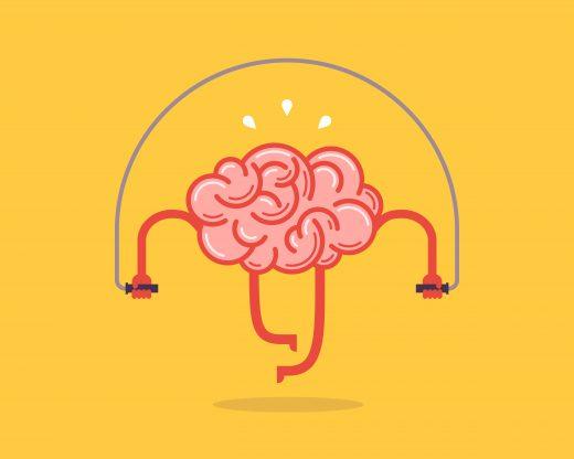 Fakt 4: Gehirn