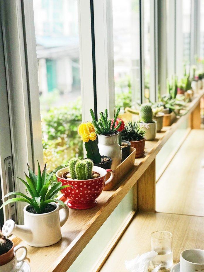 Die 10 pflegeleichtesten Büropflanzen