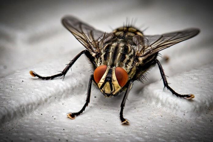 12 Tipps gegen lästige Fliegen im Büro
