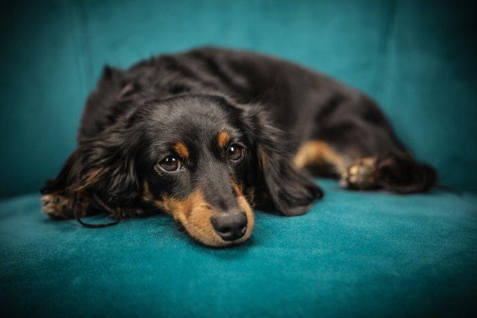 """Büro mit """"Wau-Effekt"""" Voraussetzungen für Hunde am Arbeitsplatz"""
