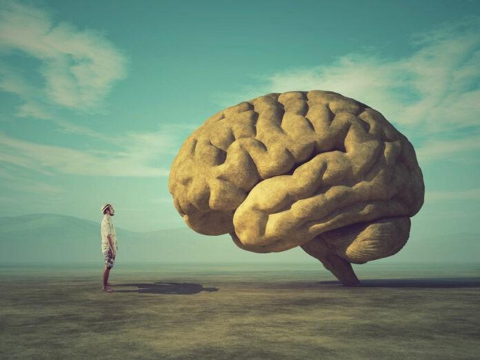 Limbisches System: Diese 7 Grund-Persönlichkeiten solltest du kennen