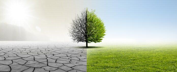 Wie du dir ein nachhaltiges Geschäftsmodell aufbaust
