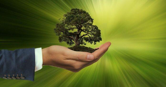 Nachhaltigkeit ist spätestens jetzt Chefsache